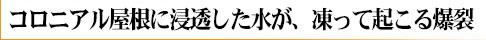 yane_damage_logo_13.jpg