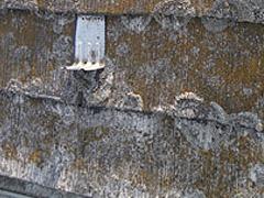 【屋根塗装】研磨高圧洗浄前写真.jpg