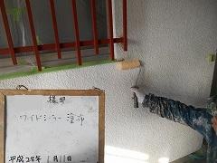 H28.6月さいたま市H様邸外壁塗装下塗り①.jpg