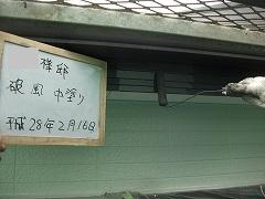 H28.7月坂戸市外壁塗装工事N様邸付帯塗装破風中塗り.jpg
