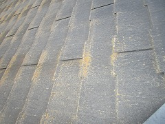 H29.1月Y様邸外壁塗装施工前屋根コケ.jpg