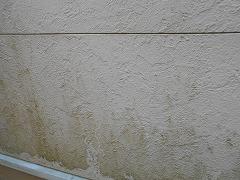 H29.2月幸手市N様邸外壁塗装・屋根塗装施工前外壁コケ