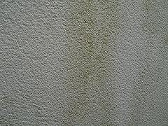 H29.3月さいたま市大和田様邸外壁塗装屋根塗装施工前コケ.jpg